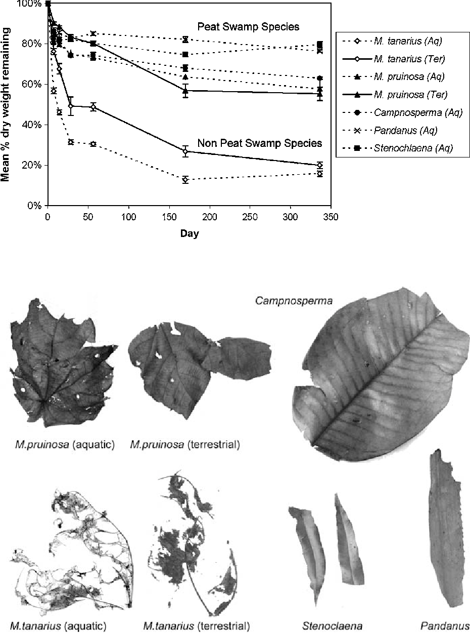 Leaf Litter Decomposition In A Tropical Peat Swamp Forest In Peninsular Malaysia Semantic Scholar