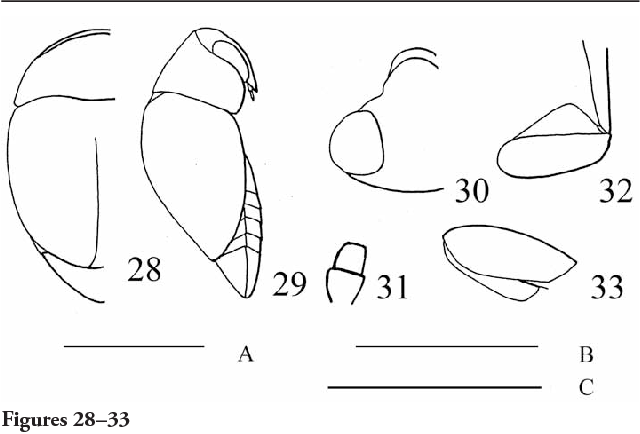 figure 28–33
