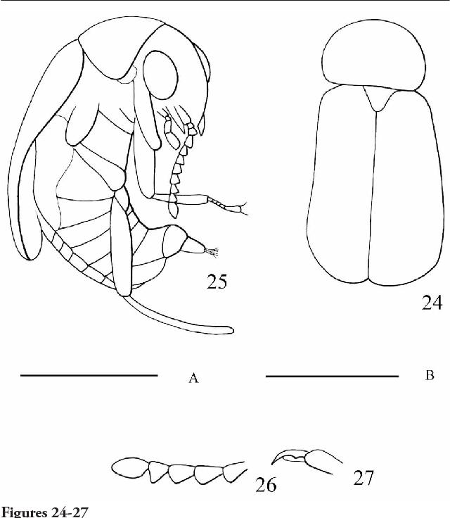 figure 24-27