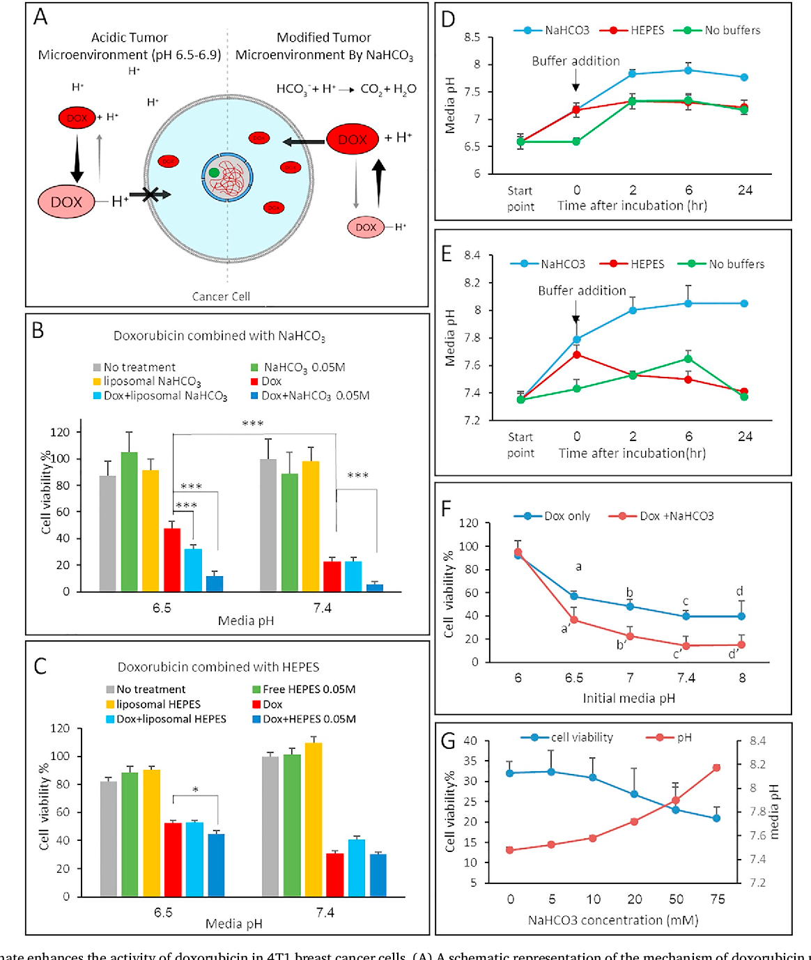 Sodium bicarbonate nanoparticles modulate the tumor pH and