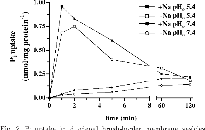Fig. 2. Pi uptake in duodenal brush-border membrane vesicles (BBMV) as a function of time. The experiments were performed for 2 animals of each feeding group, resulting in identical overshoot phenomenon. Due to the high interindividual variation, data are given exemplarily for 1 P goat. Na/ Na means the presence and the absence of an inwardly directed Na gradient, respectively; pHo 5.4/pHo 7.4 means the presence and the absence of an inwardly directed H gradient, respectively. Pi overshoot was only observed in the presence of an inwardly directed H gradient. The slight stimulation of H -dependent Pi uptake by Na was seen in each animal.