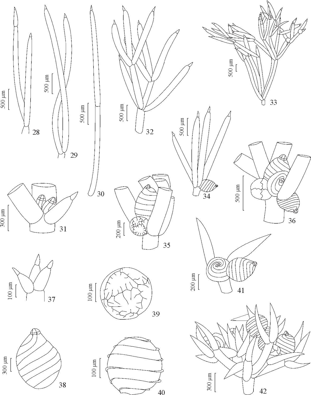 figure 28-42