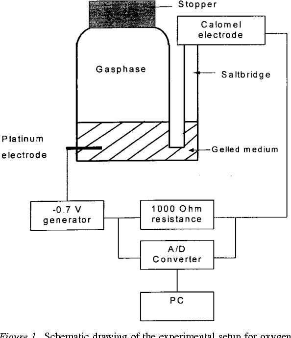 Determination Of Oxygen Profiles In Agar Based Gelled In