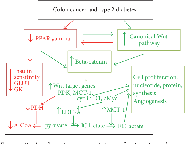 Pdf Interactions Between Ppar Gamma And The Canonical Wnt Beta Catenin Pathway In Type 2 Diabetes And Colon Cancer Semantic Scholar