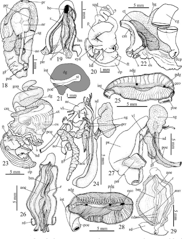 figure 18–29