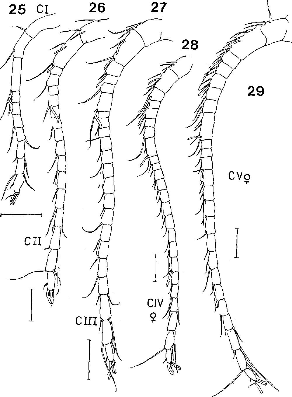 figure 25-29