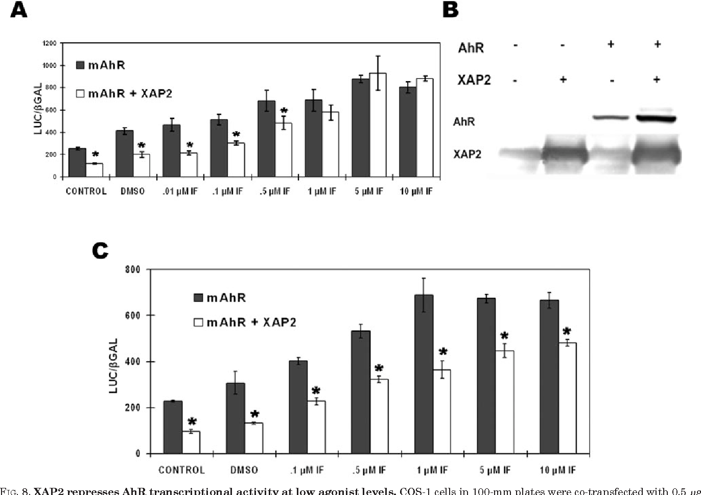 FIG. 8. XAP2 represses AhR transcriptional activity at low agonist levels. COS-1 cells in 100-mm plates were co-transfected with 0.5 g of pcDNA3- mAhR, 100 ng of pGudLuc 6.1, 30 ng of pCMV- Gal, either 2 or 4 g of pCI/XAP2, and pCI was added, for a total of 8 g of DNA. After 9 h transfected cells were transferred to 12-well plates; 13 h later cells were treated with iodoflavone. After 8 h in the presence of ligand, cells were lysed, and reporter activity was assessed. A, COS-1 cells were co-transfected with 4 g of pCI-XAP2. B, the level of AhR and XAP2 in cells transfected with the same vector composition as in A was assessed by protein blot analysis. C, COS-1 cells were co-transfected with 2 g of pCI-XAP2. An asterisk above the bar corresponds to a statistical difference (p 0.03) using a paired Student's t test. The error bars represent the standard deviation obtained from triplicate samples.