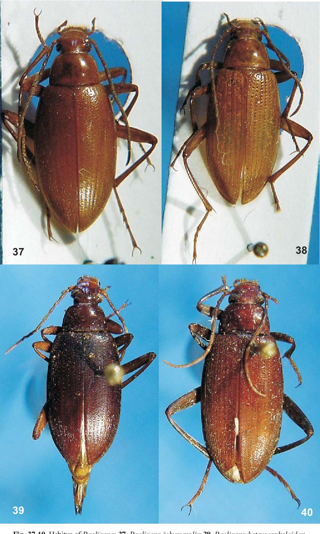 figure 37-40
