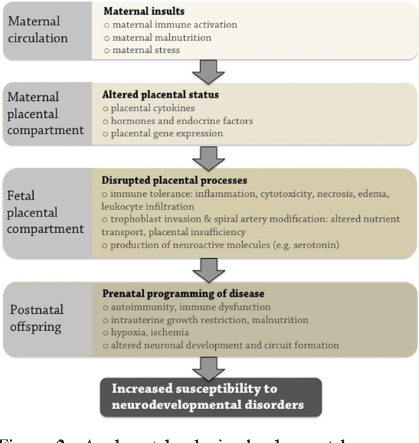 Disrupted Immunity In Fetal Brain Is >> Placental Regulation Of Maternal Fetal Interactions And