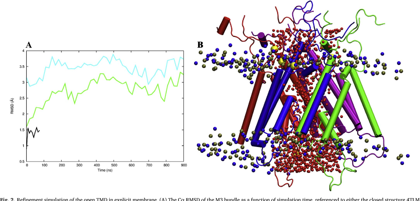 Structural Modeling For The Open State Of An Nmda Receptor Semantic Scholar