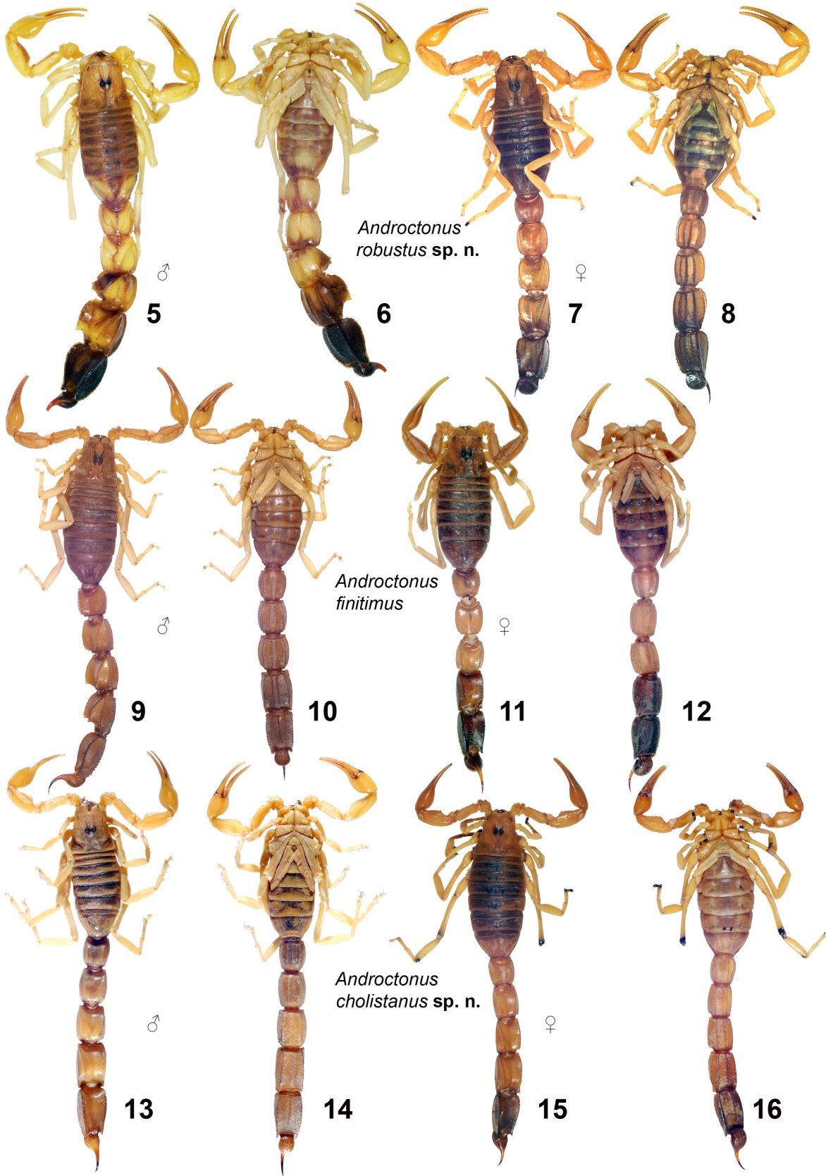 figure 5–16