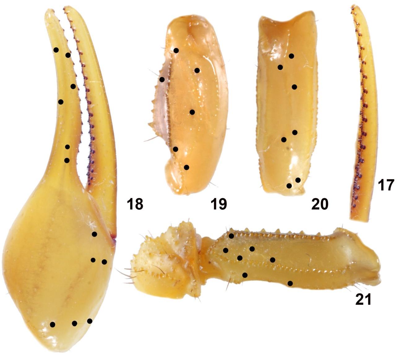 figure 17–21