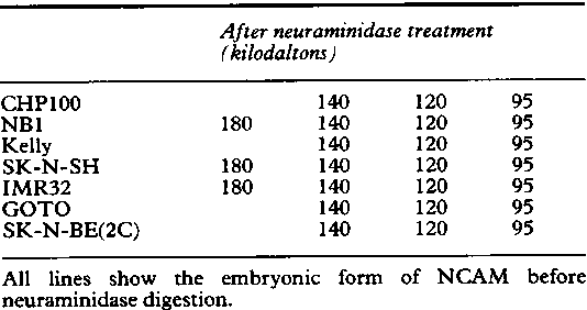 Table I From Expression Of Neural Cell Adhesion Molecule