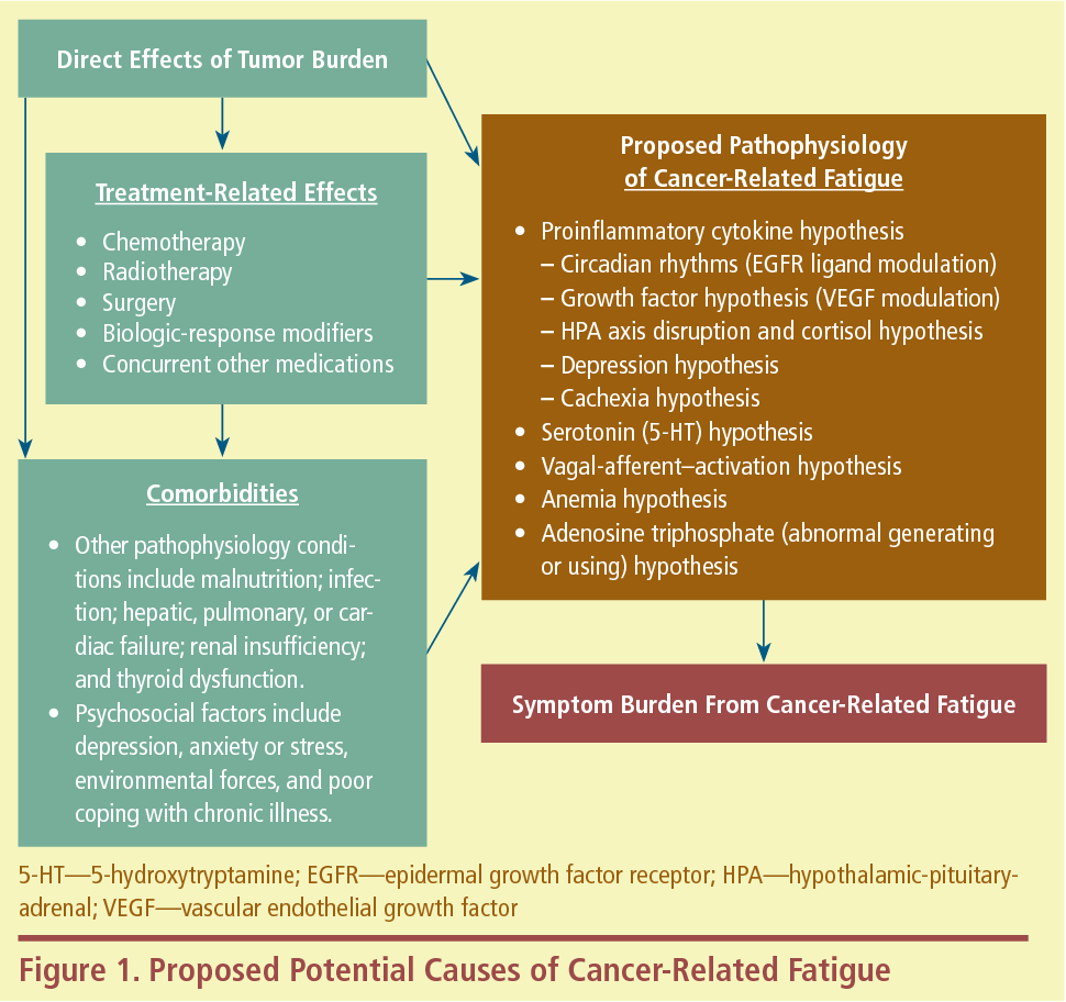 Figure 1 From Pathophysiology Of Cancer Related Fatigue