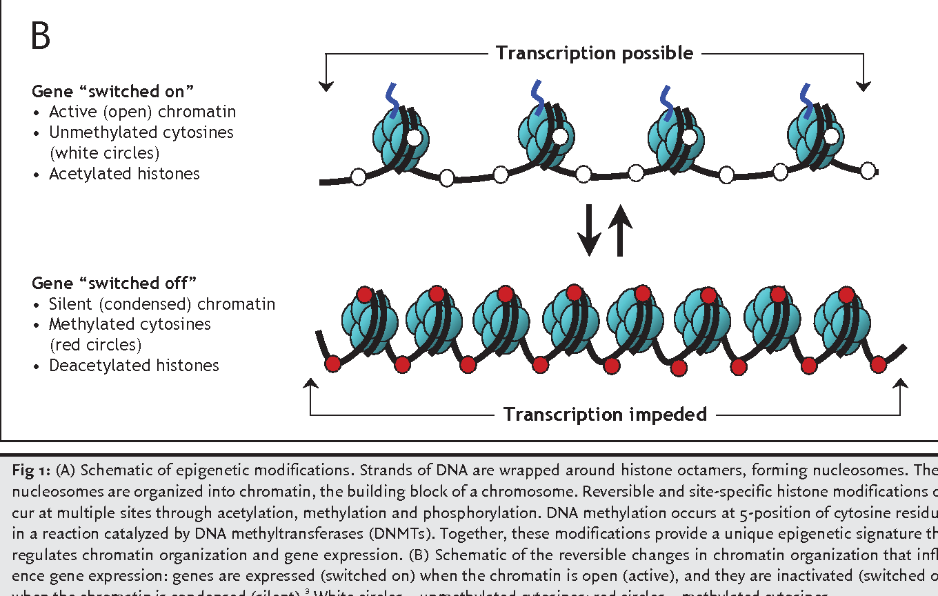 Dna methylation research papers