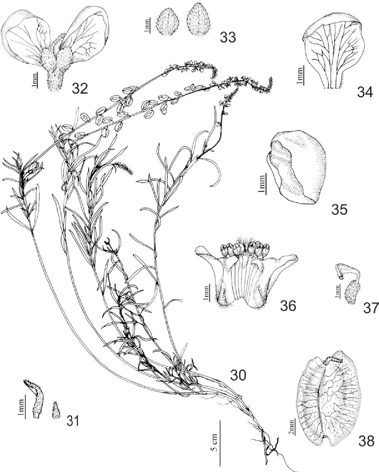 figure 30-38