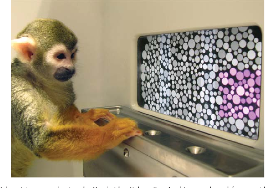 Figure 1 From Curing Color Blindness Mice And Nonhuman