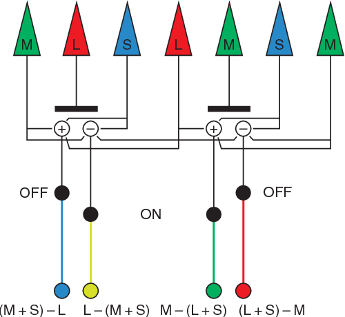 Figure 2 From Curing Color Blindness Mice And Nonhuman