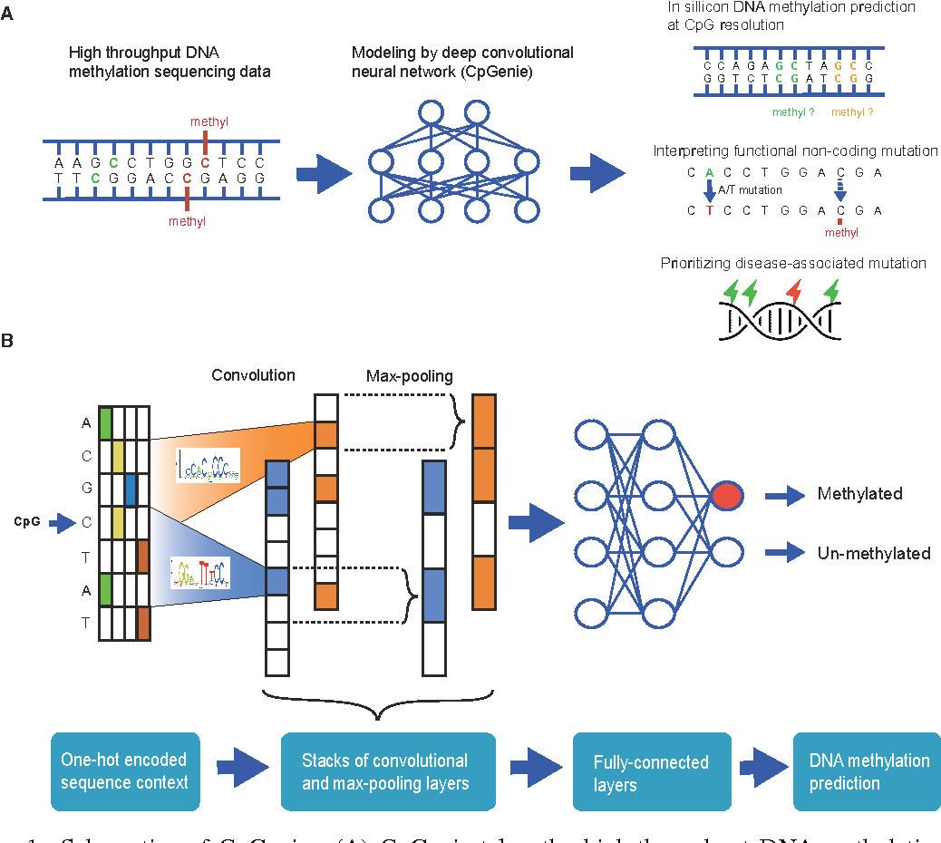 Figure 1 from Discovering DNA motifs and genomic variants