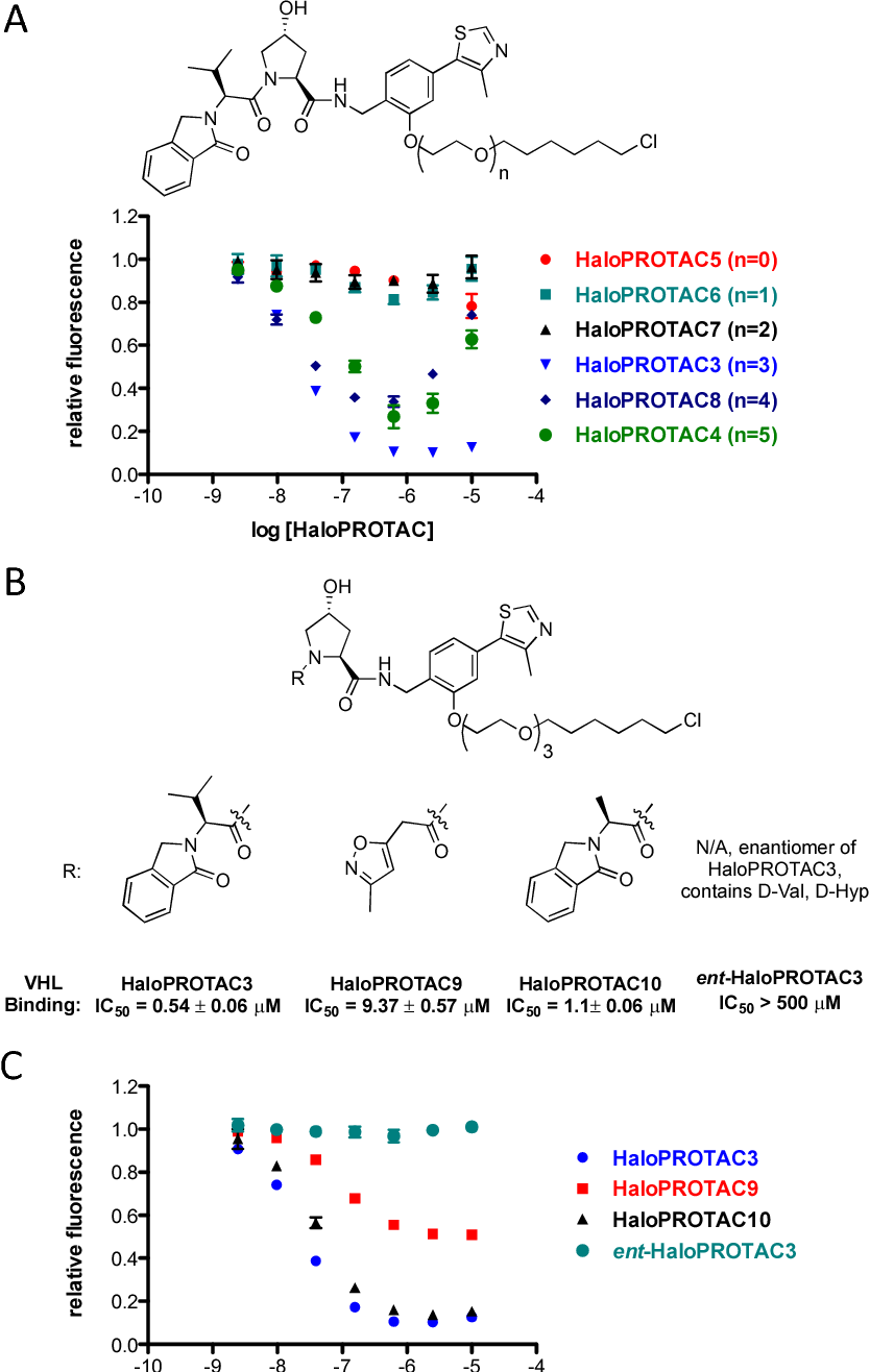 Figure 3 from HaloPROTACS: Use of Small Molecule PROTACs to