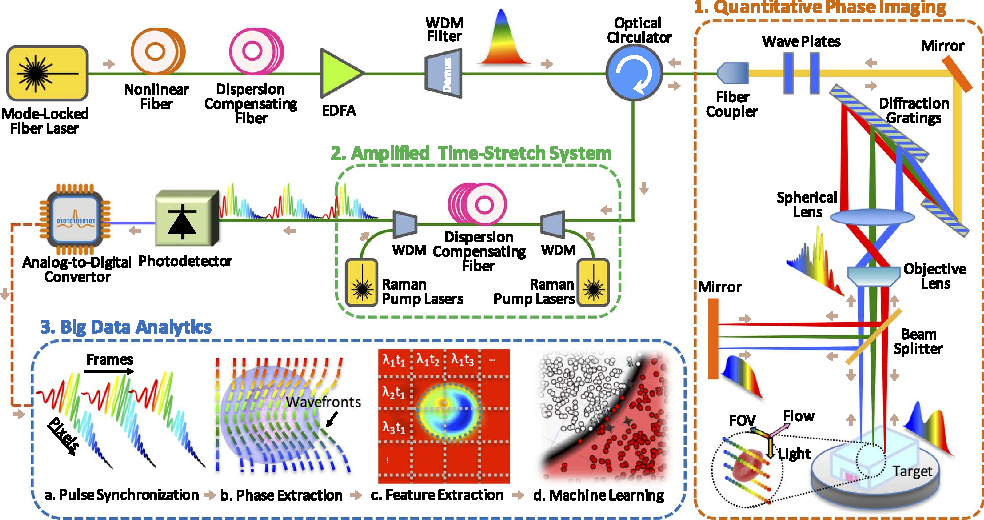 Figure 1 from Deep Learning in Label-free Cell