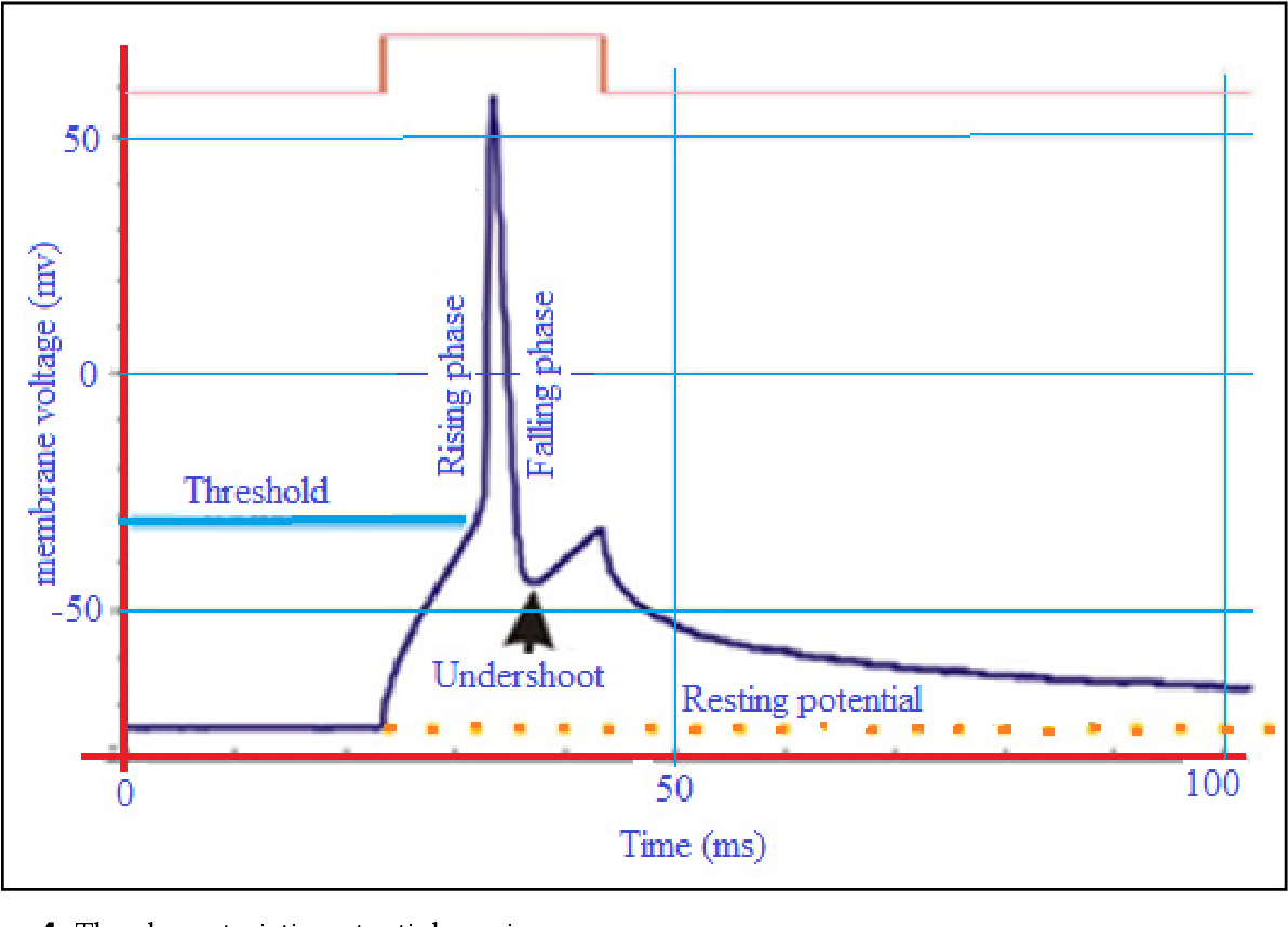 PDF] Membrane Electrochemistry: Electrochemical Processes in