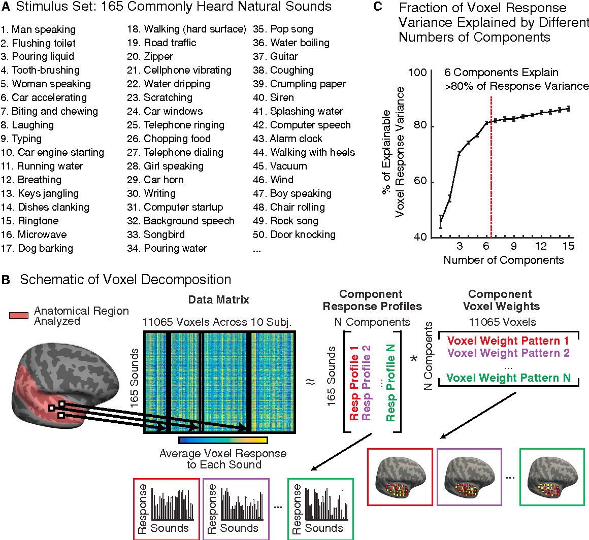 Distinct Cortical Pathways for Music and Speech Revealed by