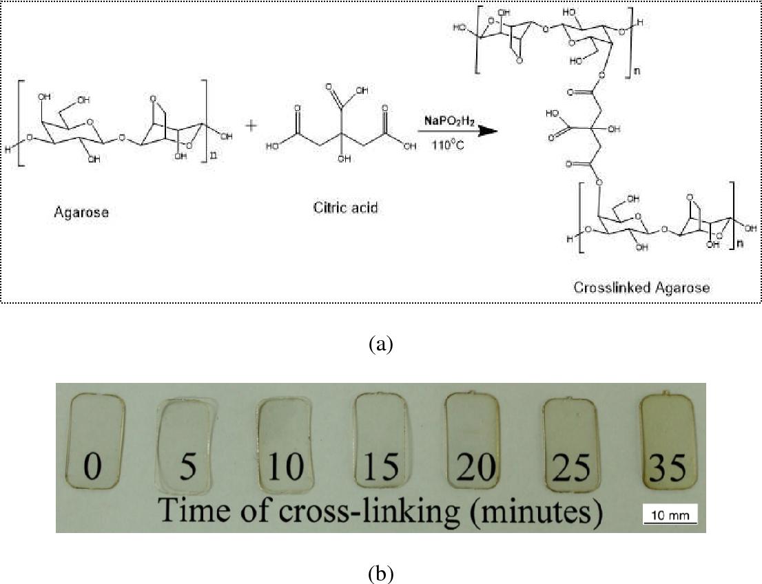 diagram batang ceo figure 1 from crosslinking of agarose bioplastic using citric acid  agarose bioplastic using citric acid