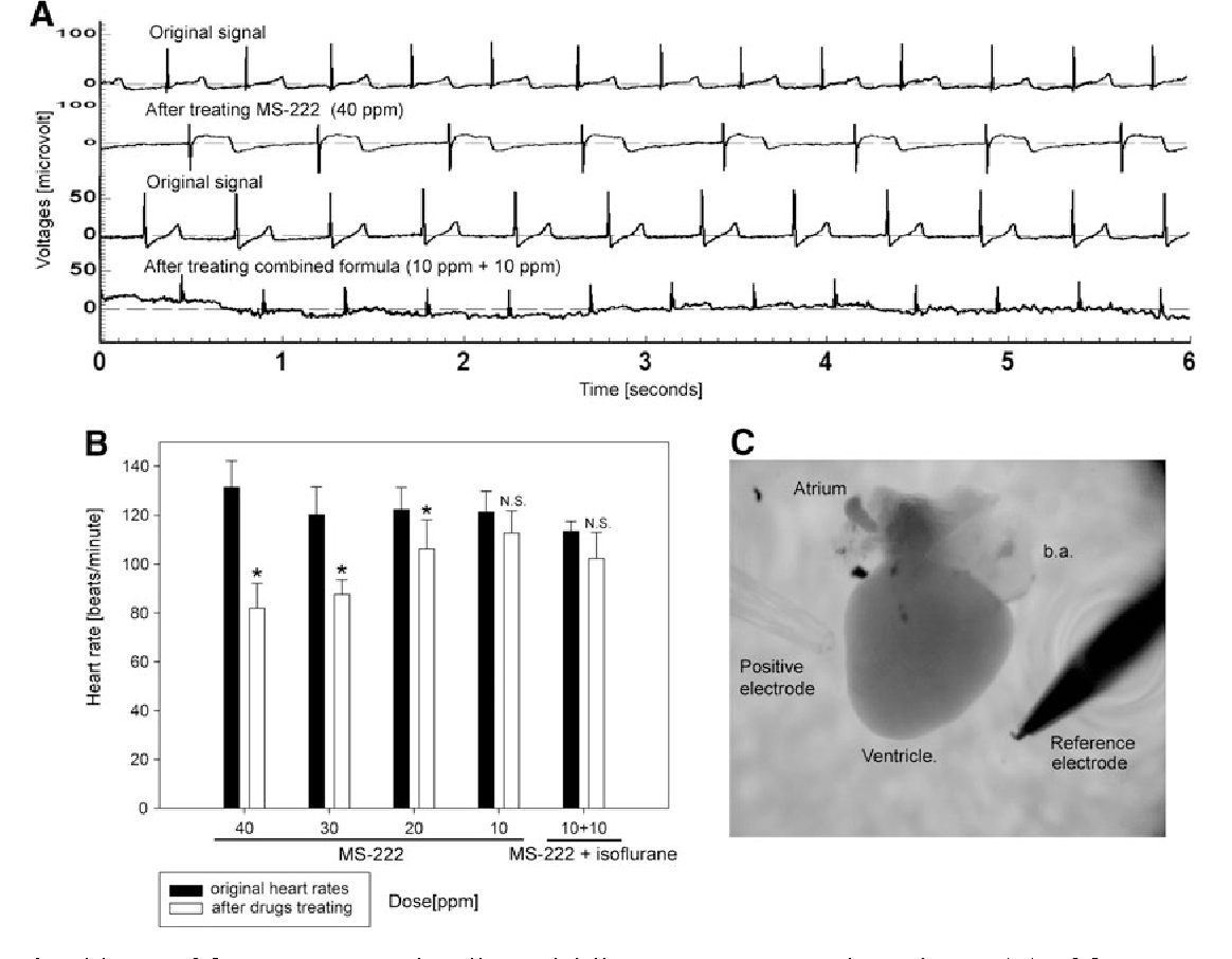 Figure 3 from Combined use of MS-222 (tricaine) and