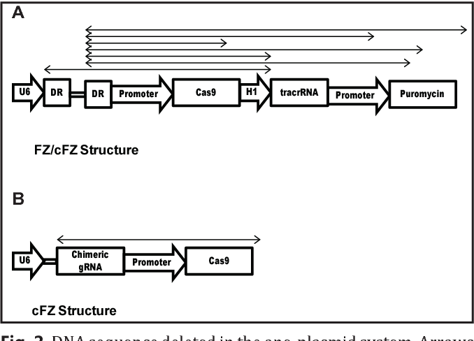 Figure 2 From Optimized Plasmid Construction Strategy For
