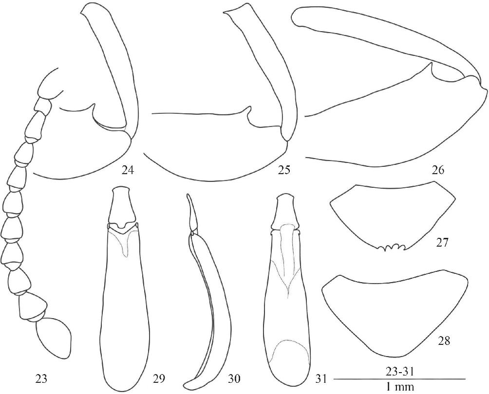 figure 23–31