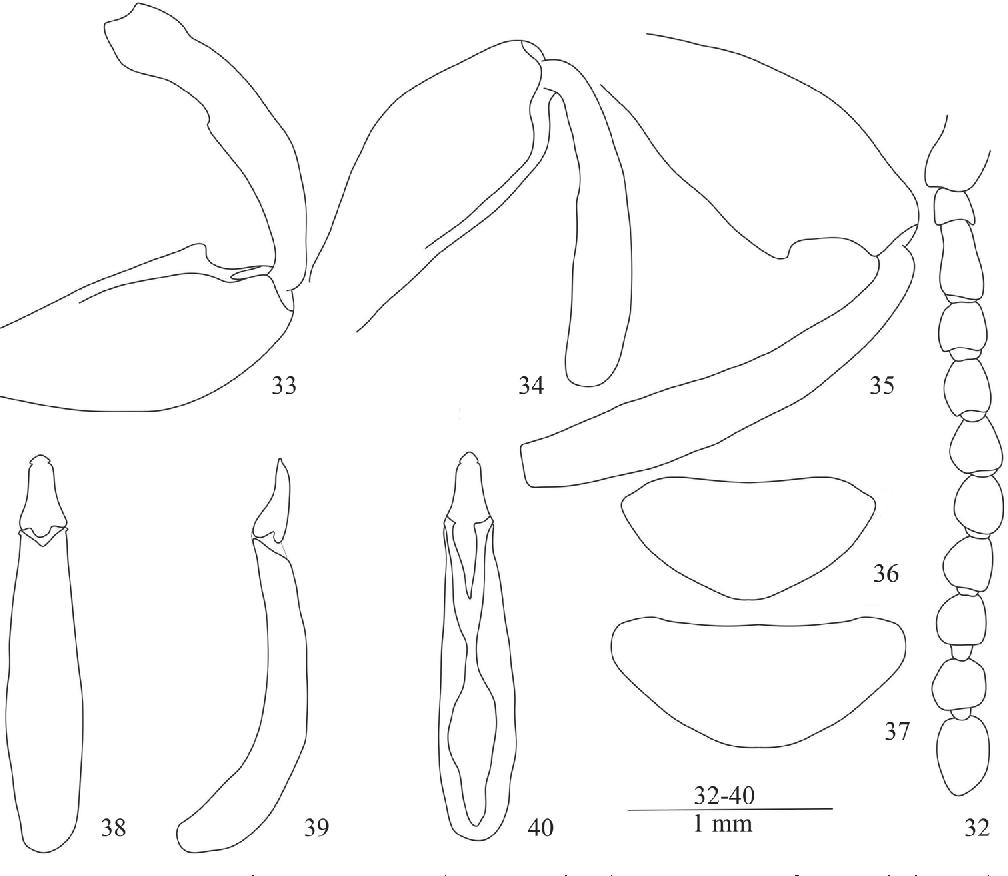 figure 32–40