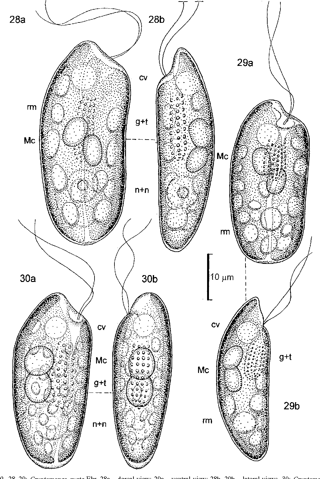 figure 28–30