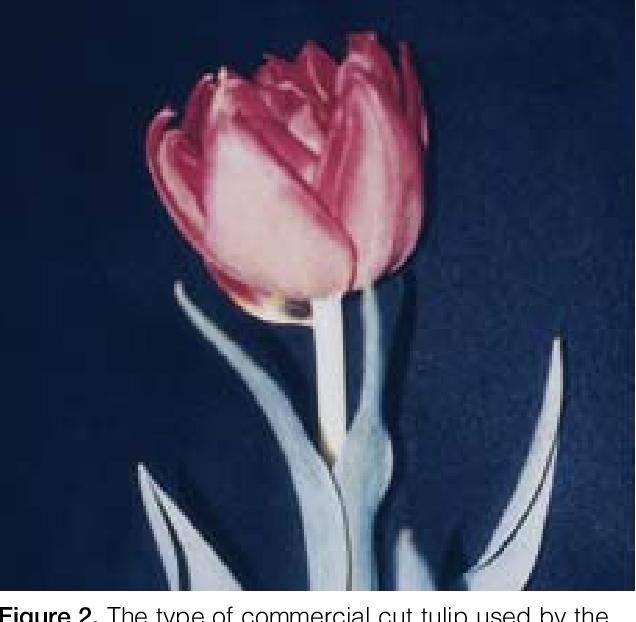 Figure 2 from Fingertip dermatitis in a retail florist