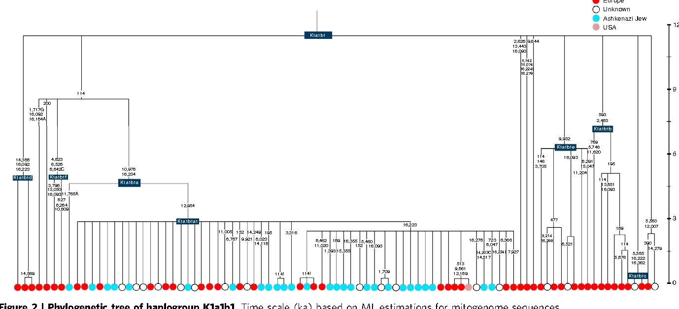 A substantial prehistoric European ancestry amongst