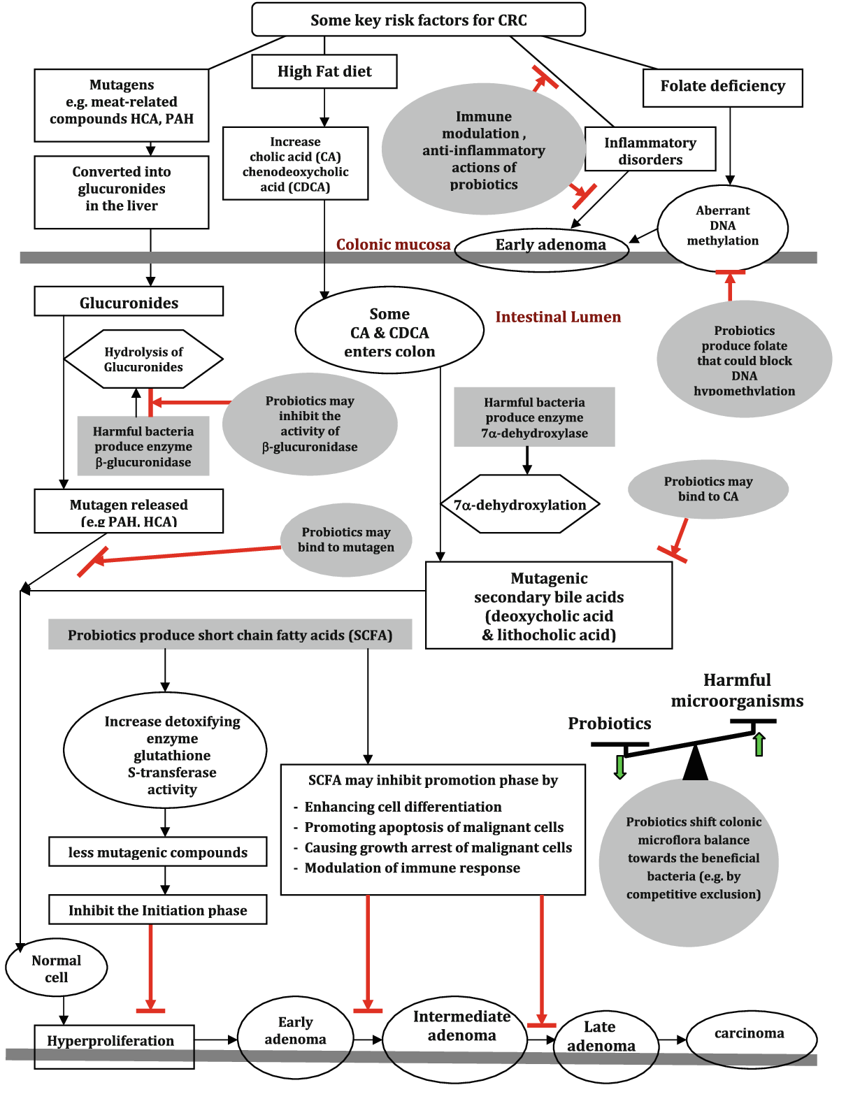 Figure 1 From A Potential Role Of Probiotics In Colorectal Cancer Prevention Review Of Possible Mechanisms Of Action Semantic Scholar
