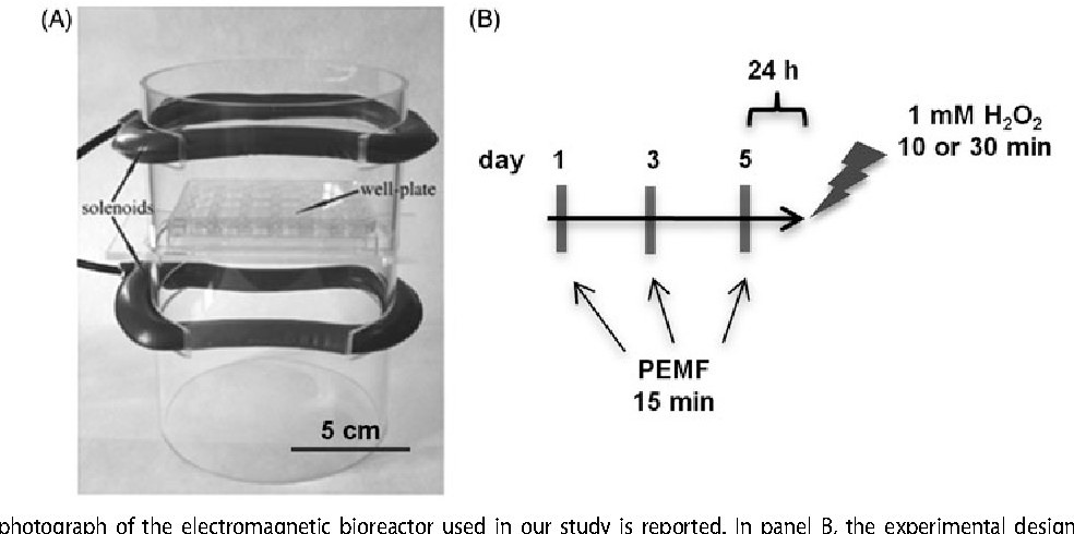 Figure 1 from Pulsed electromagnetic field (PEMF) prevents