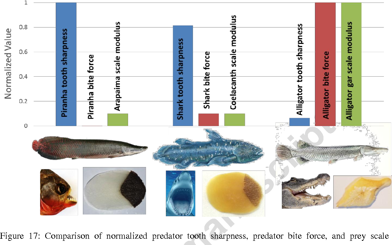 Scale Per Piscine.Figure 17 From A Comparative Study Of Piscine Defense The