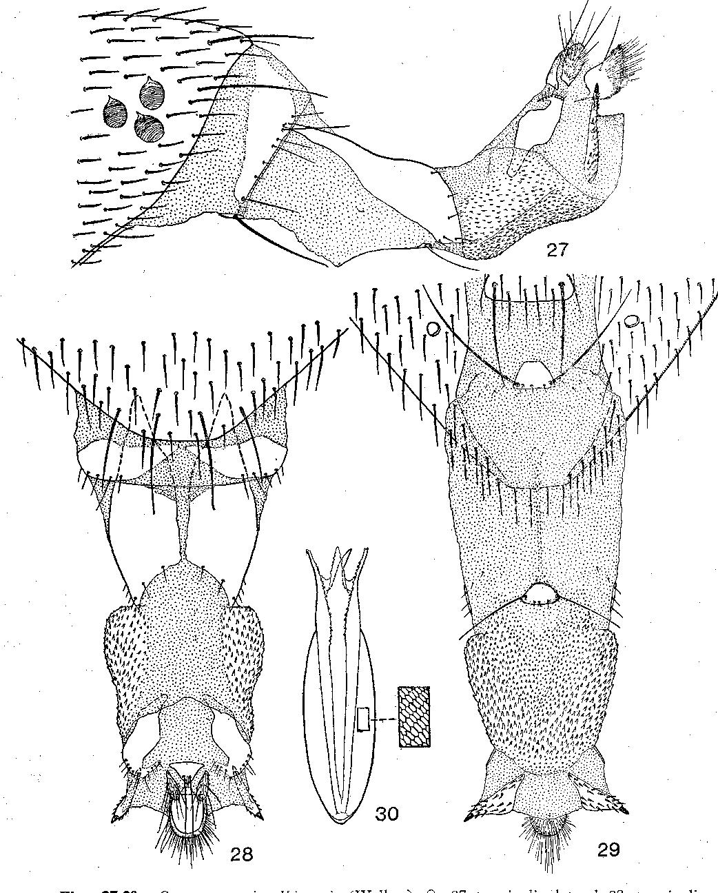 figure 27-30
