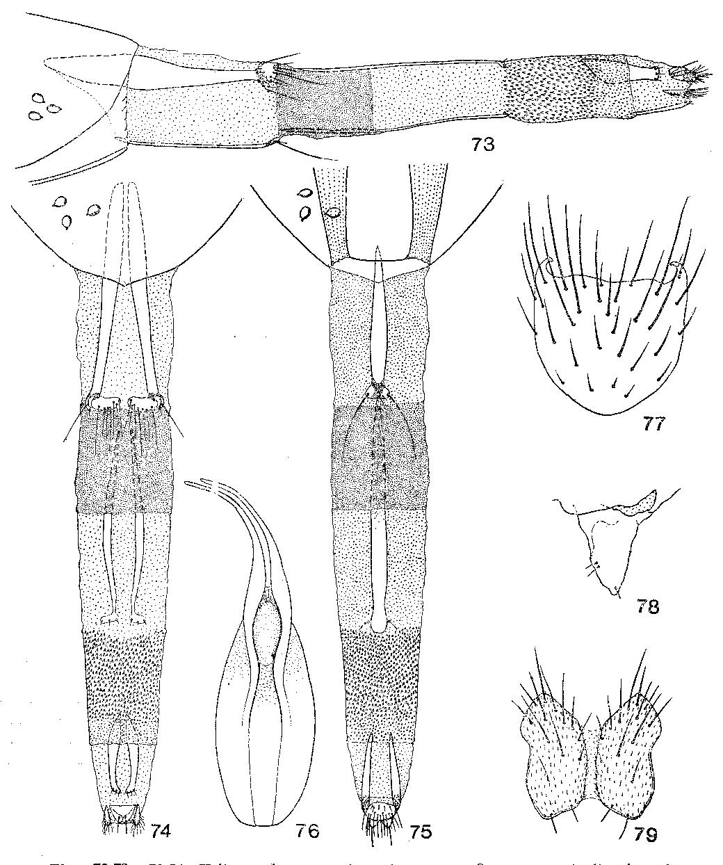 figure 73-79