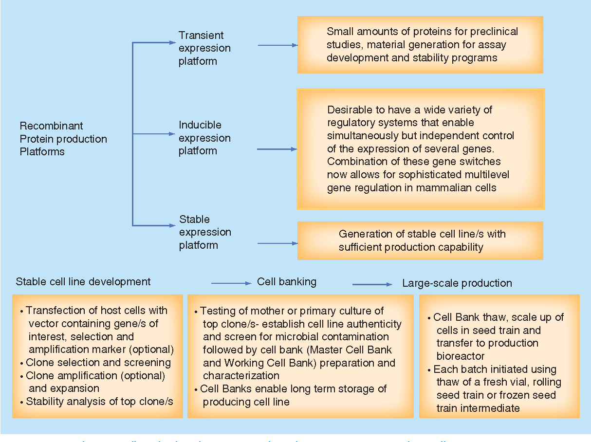 Figure 1 from Recent advances in optimal cell banking of