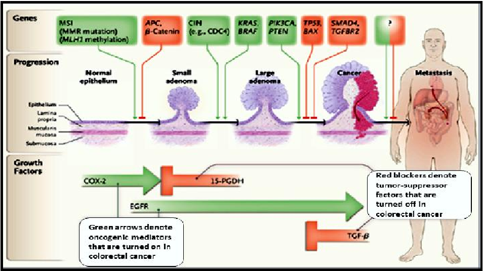 Pdf Genetic Basis Of Colorectal Cancer Semantic Scholar