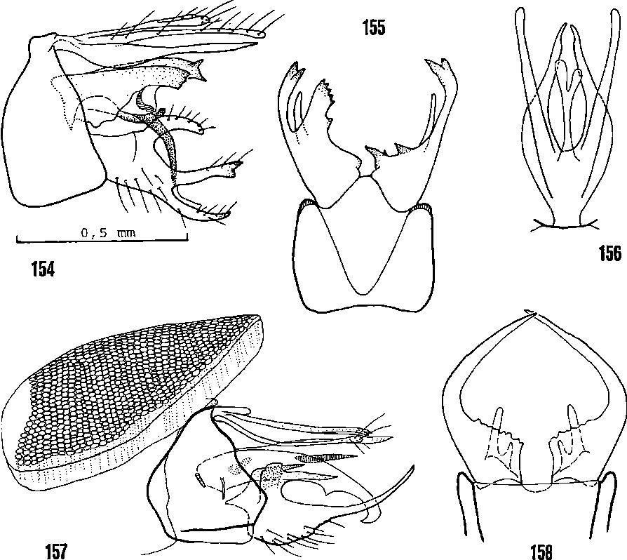 figure 155