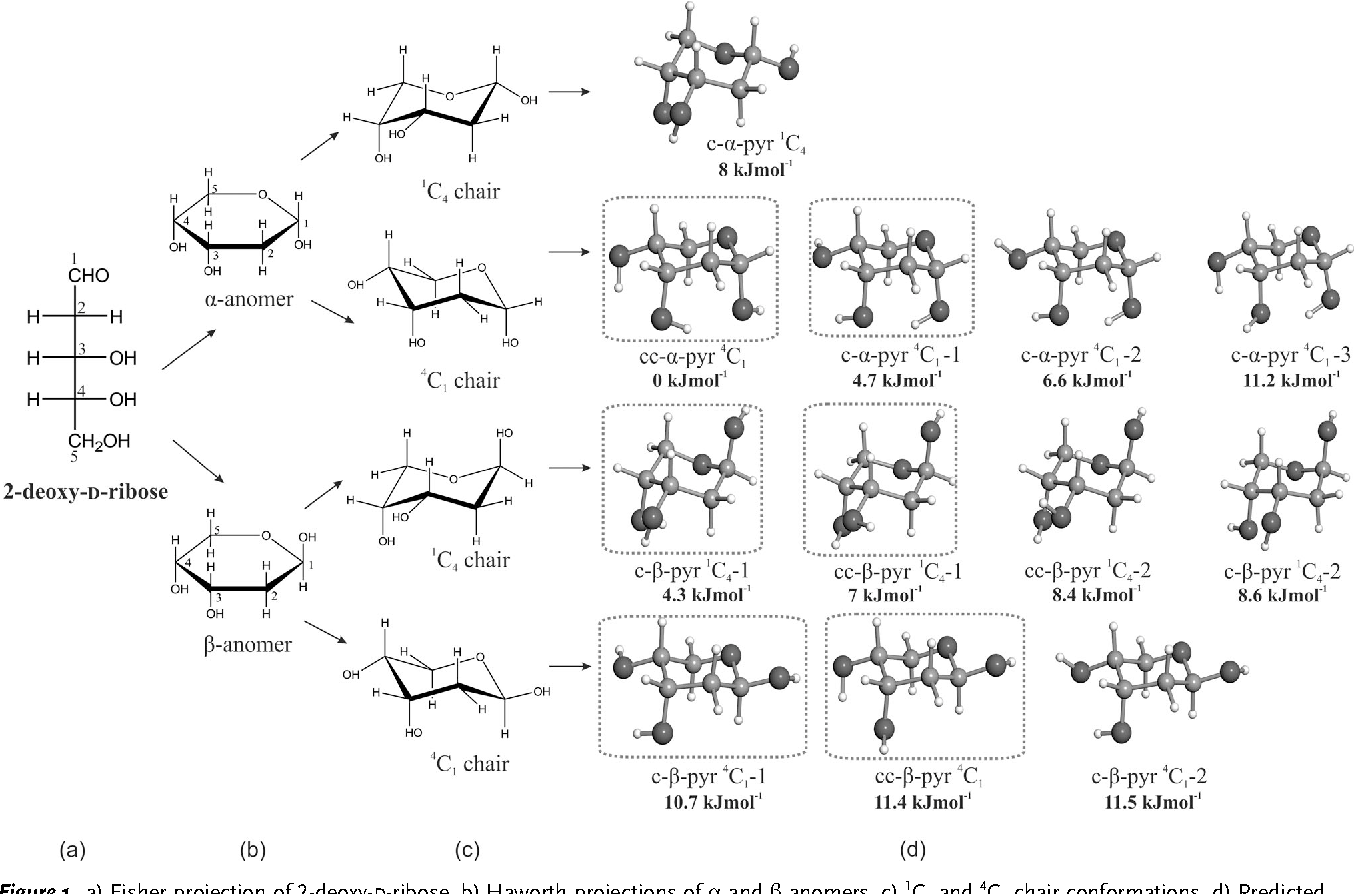 diagram of ribose deoxy figure 1 from six pyranoside forms of free 2 deoxy d ribose  deoxy d ribose
