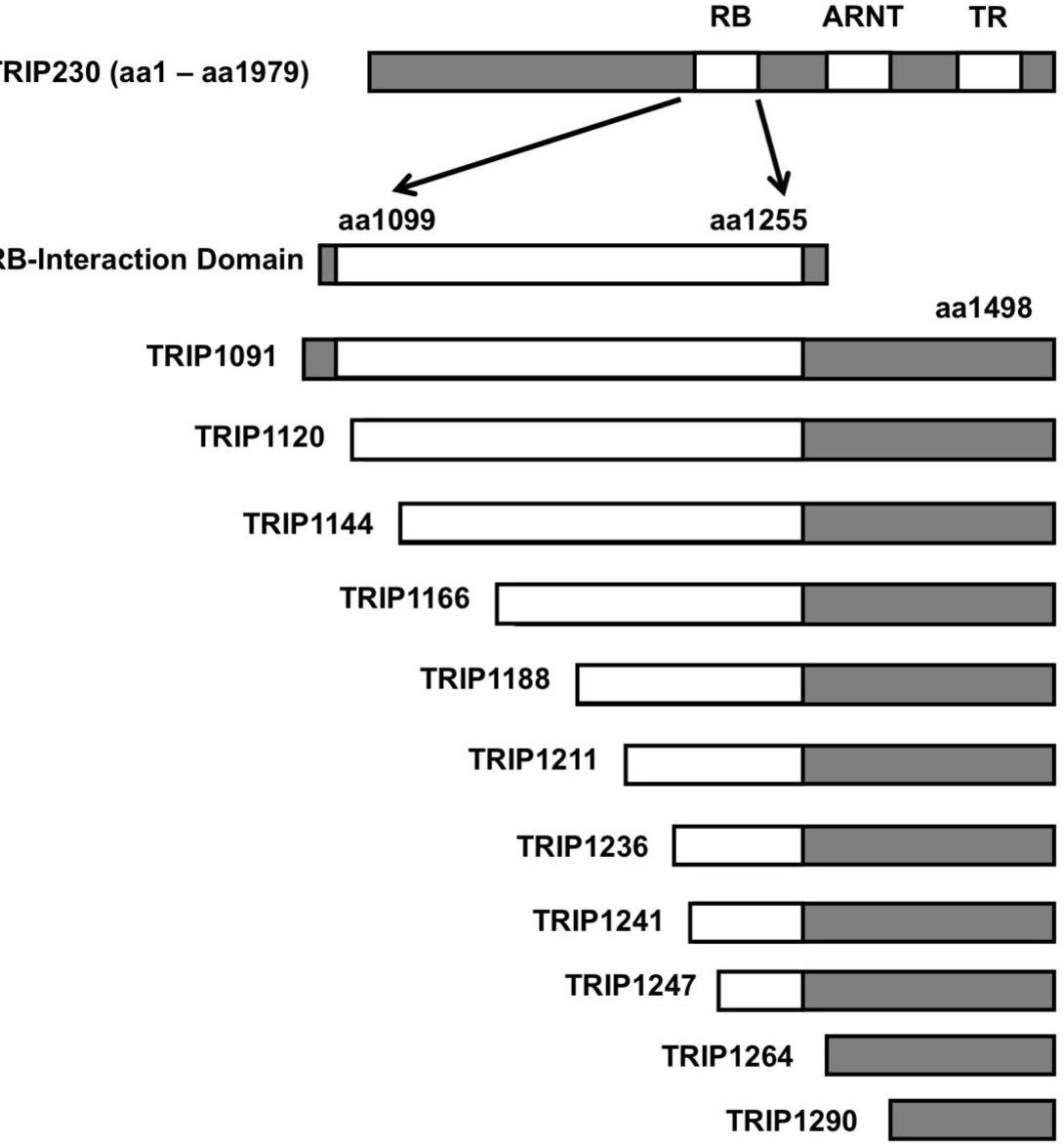 Pdf Protein Protein Interactions Mediating Hypoxia Inducible Factor 1 Complex Function Semantic Scholar