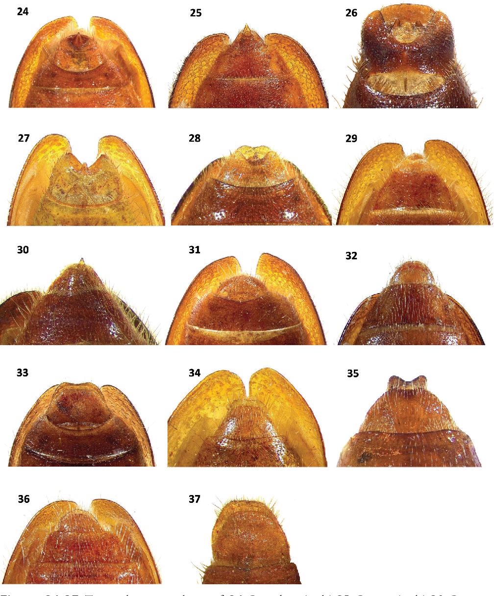 figure 24–37