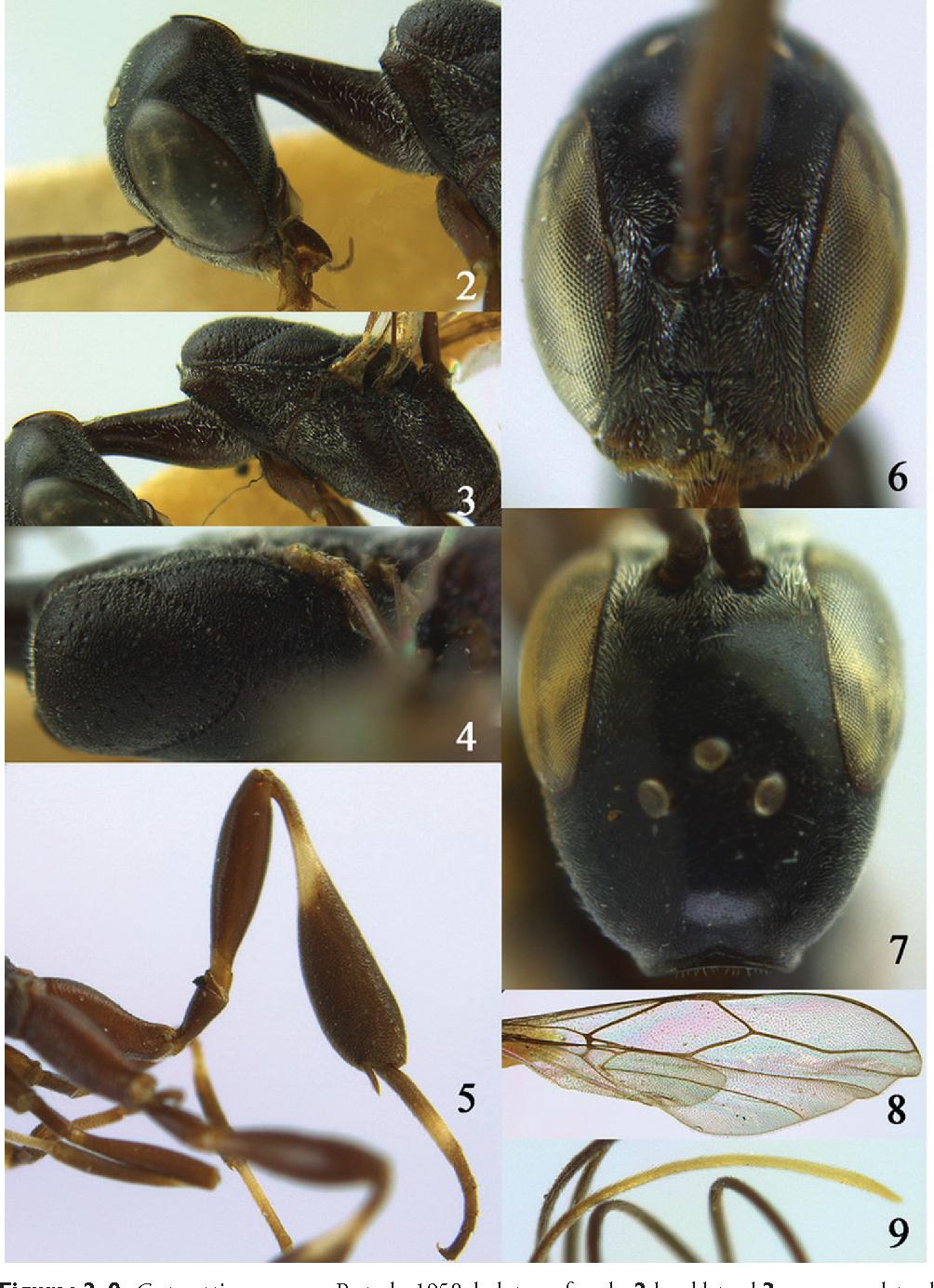 figure 2–9
