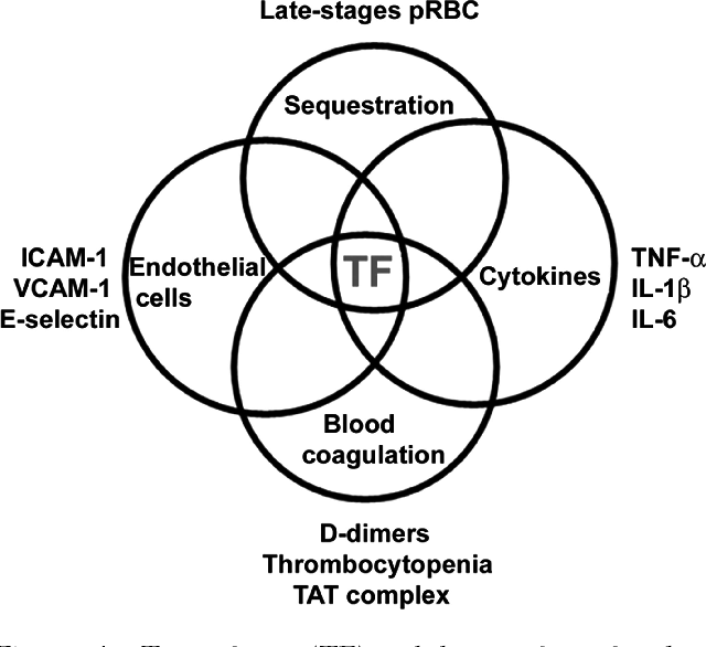 Figure 4 from Blood coagulation, inflammation, and malaria