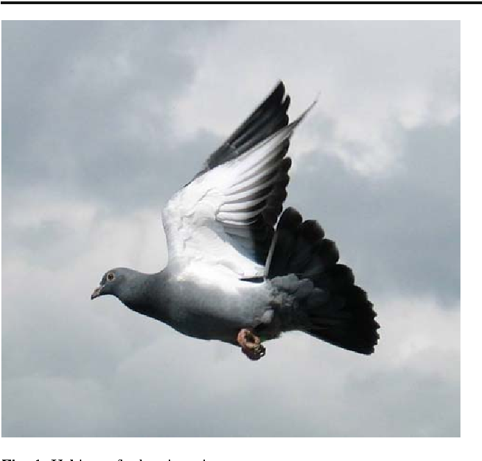 Neurobiology of the homing pigeon—a review - Semantic Scholar