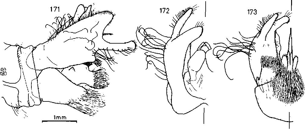 figure 171-173